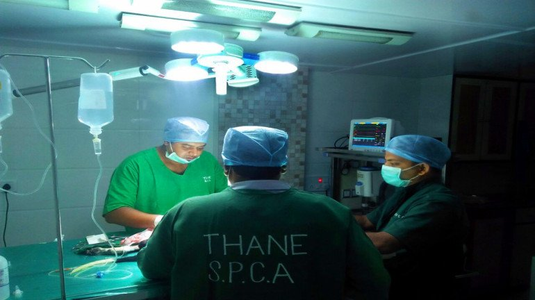 Thane SPCA to open an ICU for animals