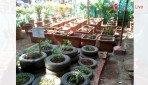 पालिका उद्यान में औषधी पौधे
