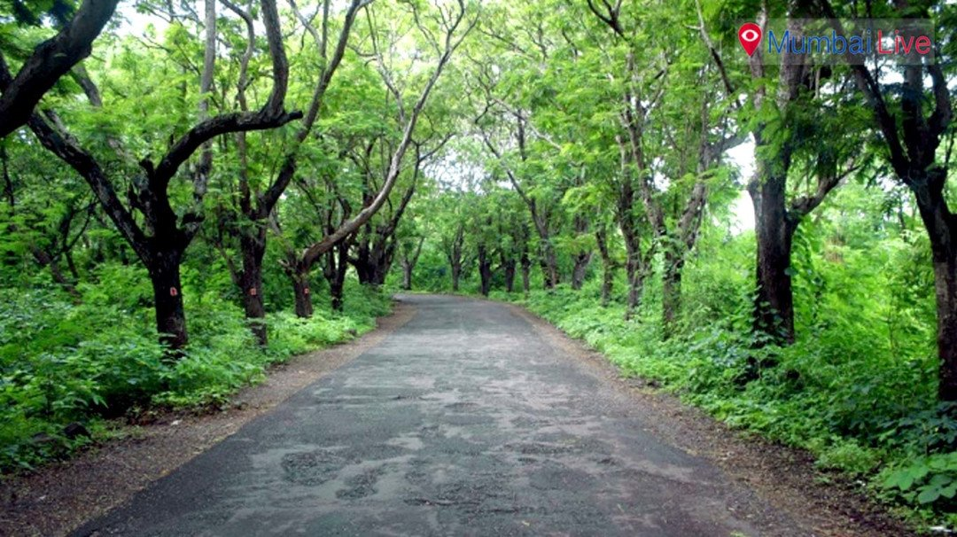 State eyeing forest land in national park for Metro car shed?