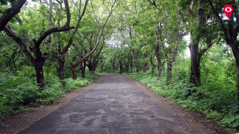 #save aarey: पेड़ों को बचाने के लिए बॉलीवुड आया आगे