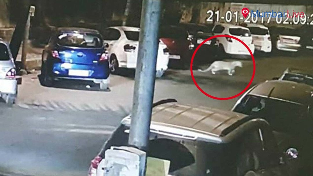 Leopard sighted in Mulund