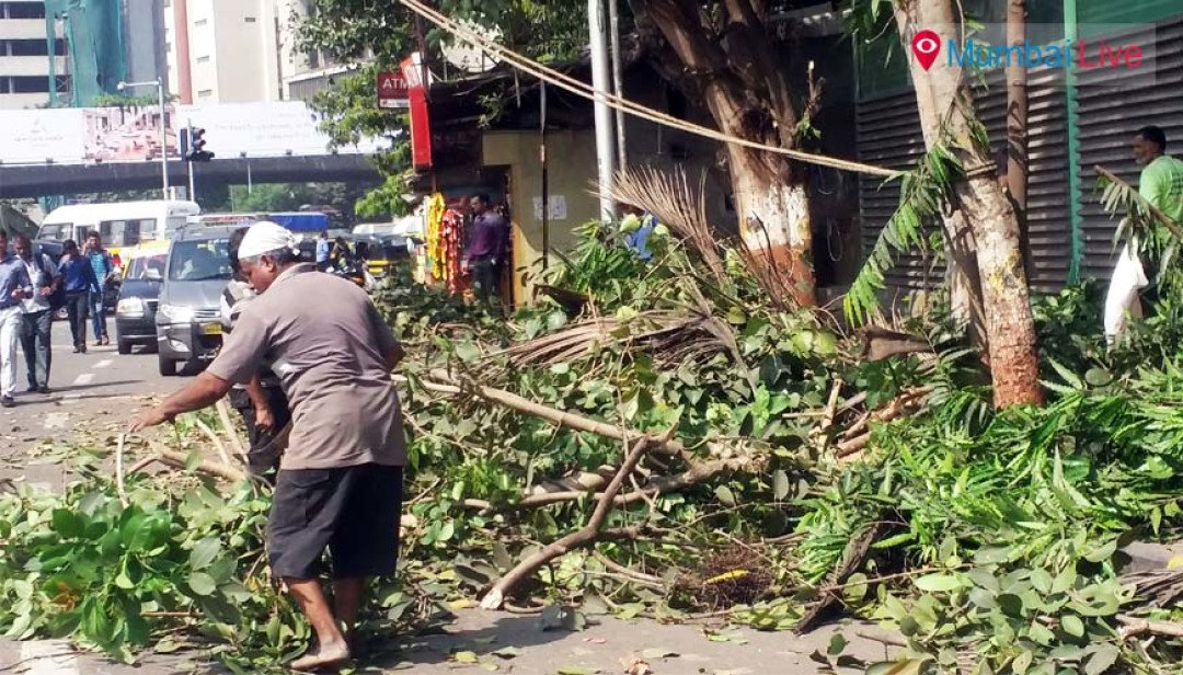 Civic officials cut down branches