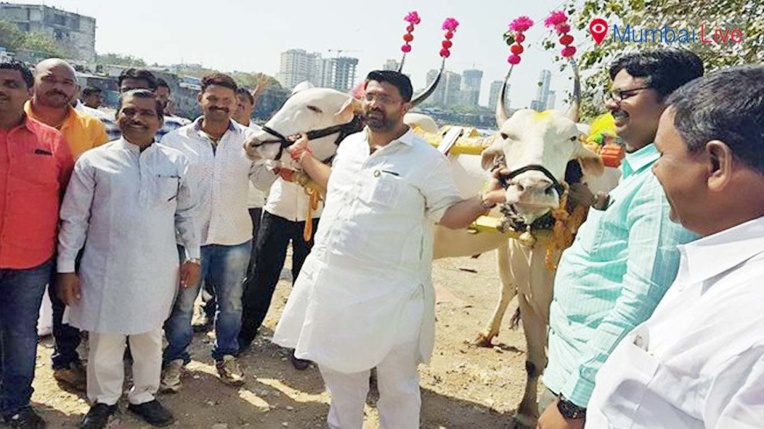 Make bullock cart racing legal - Mahesh Landge