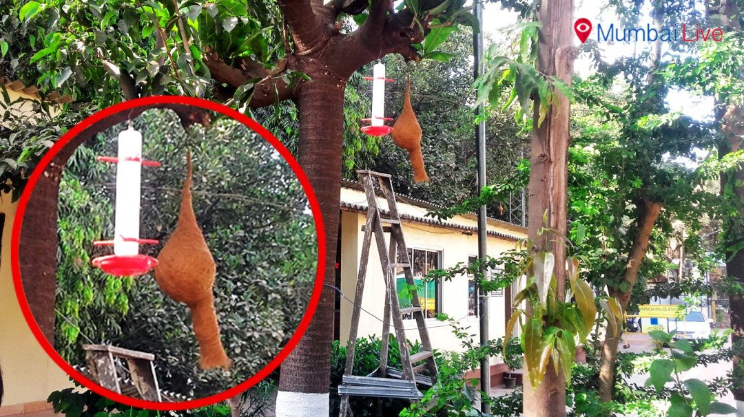 Versova police build 100 artificial nests for sparrows
