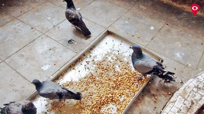 उकाड्यामुळे पशु-पक्षीही हैराण