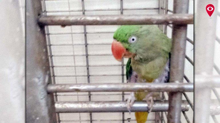 Animals suffer due to scorching heat in Mumbai