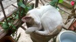 बिल्ली पाला तो घर नहीं, सोसायटी का फरमान