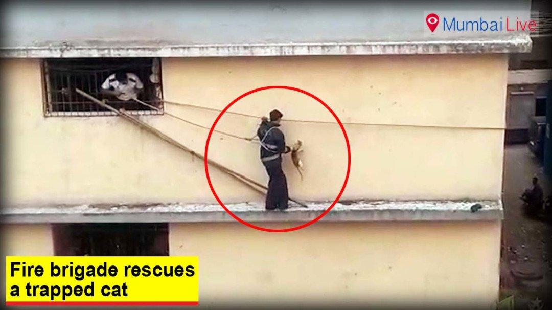 Fire brigade rescues a trapped cat