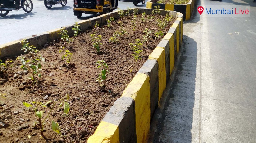 MMRDA should take care of plants, says social activist