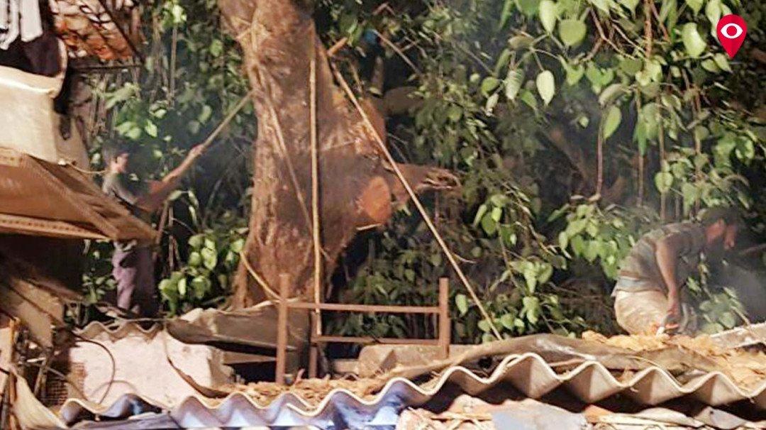 चेंबूरमध्ये झाड कोसळून घराचे नुकसान