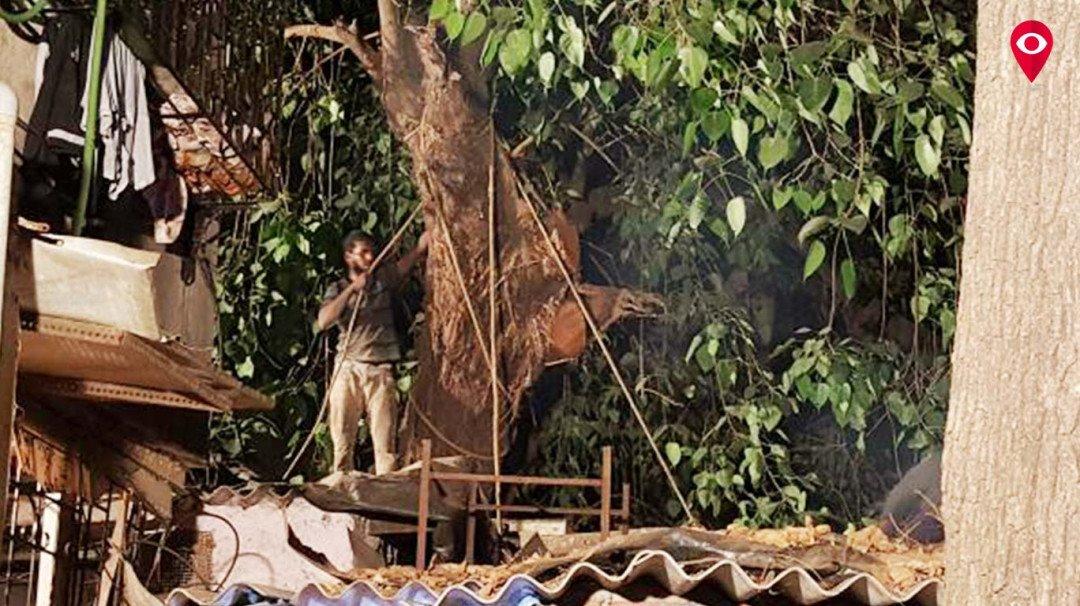 घर पर  गिरा पेड़