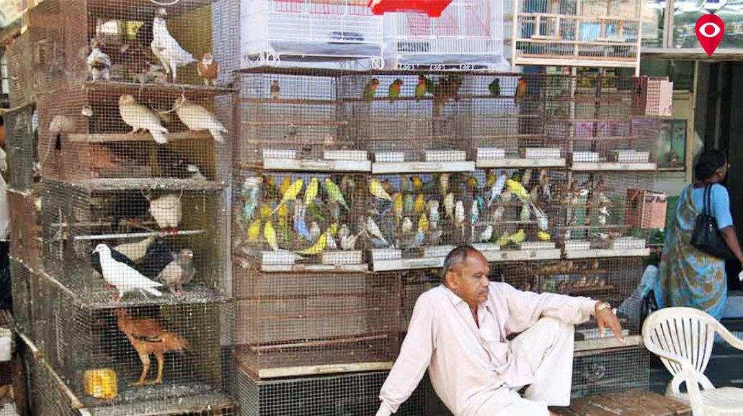 क्राफर्ड मार्केट में पशु पक्षियों को बेचने वाले दुकानदारों को बीएमसी की मंजूरी