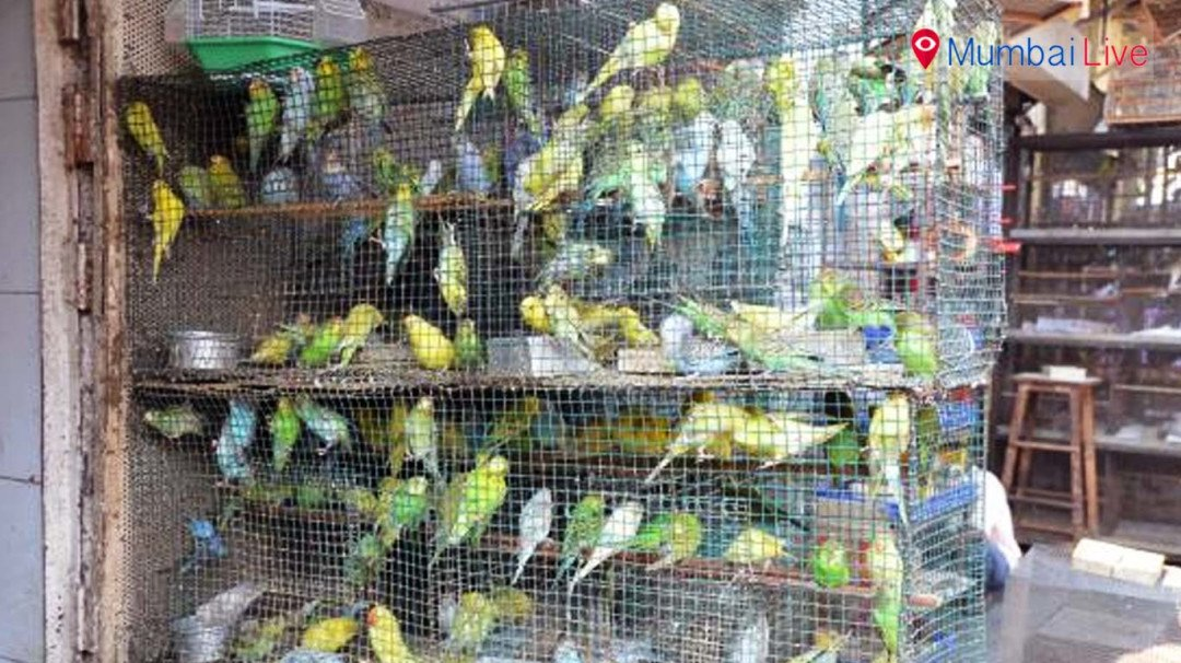 No sale of Exotic birds and animals without BMC license