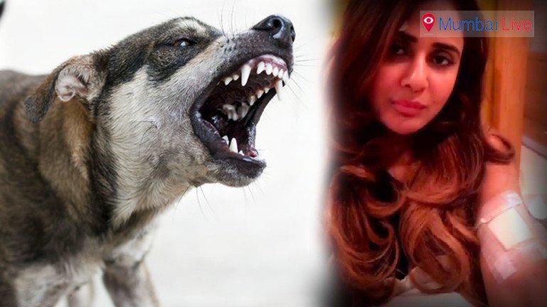 'मुंबईत भटक्या कुत्र्यांचा सुळसुळाट'