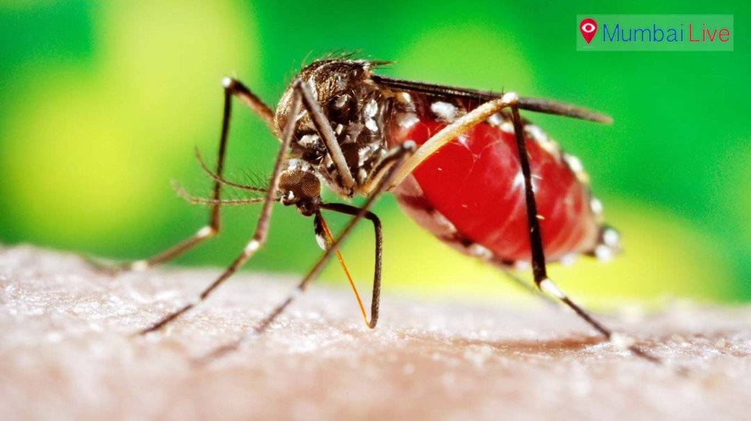 BMC approaches NGO's to control mosquitoes at construction site