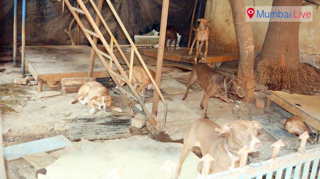 इमारत बनी आवारा कुत्तों का अड्डा