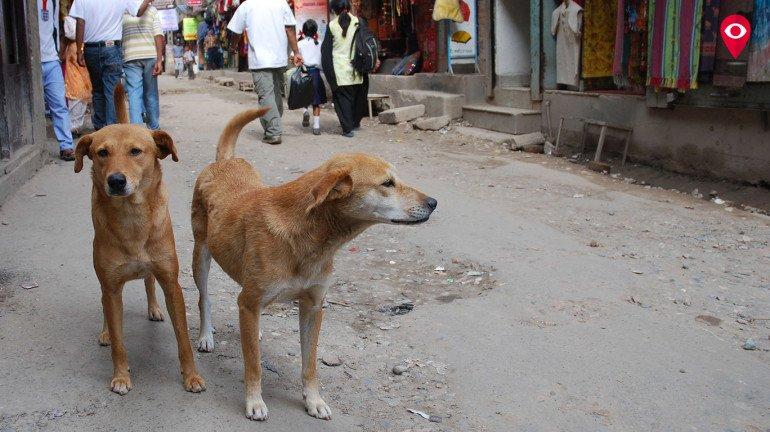 आता भटक्या कुत्र्यांचा त्रास कमी होईल?