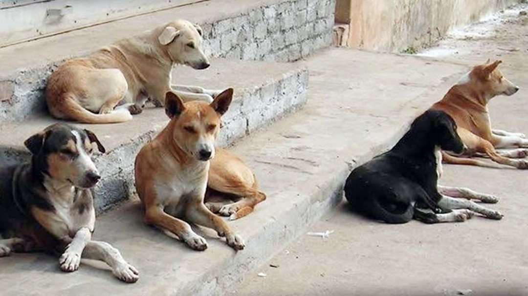 Over a lakh unsterilised stray dogs on the streets of Mumbai