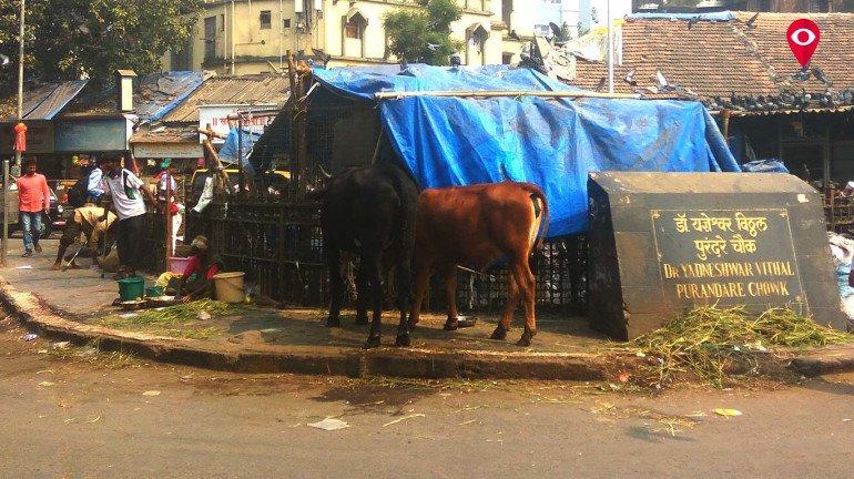 हा कबुतरखाना की गाईचा गोठा?