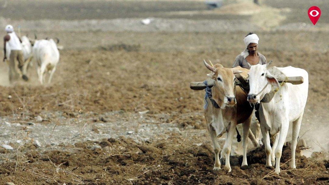 कर्जमाफी झालेले मुंबईतले 813 शेतकरी कोण?