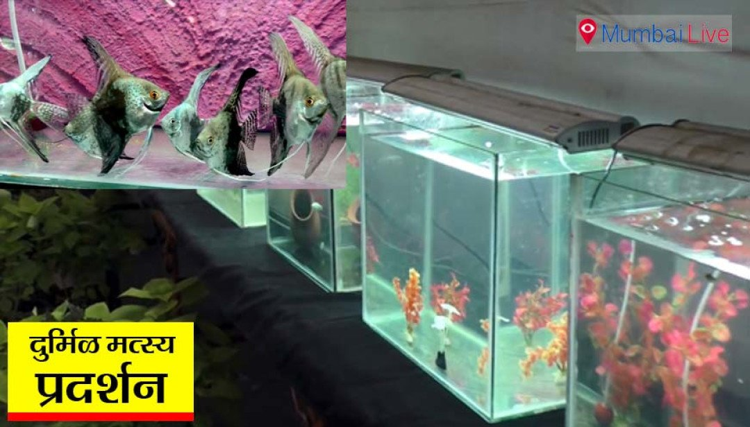 Fish exhibition in Mulund