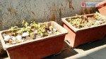 वृक्षारोपण के लिए लगायी गयी जालियां बनी कचरे की कुंडी