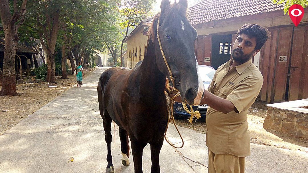Joyride case — Horse sent for a medical examination to BSPCA hospital