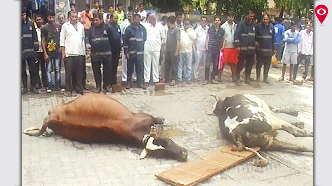 करंट लगने से दो गाय की मौत