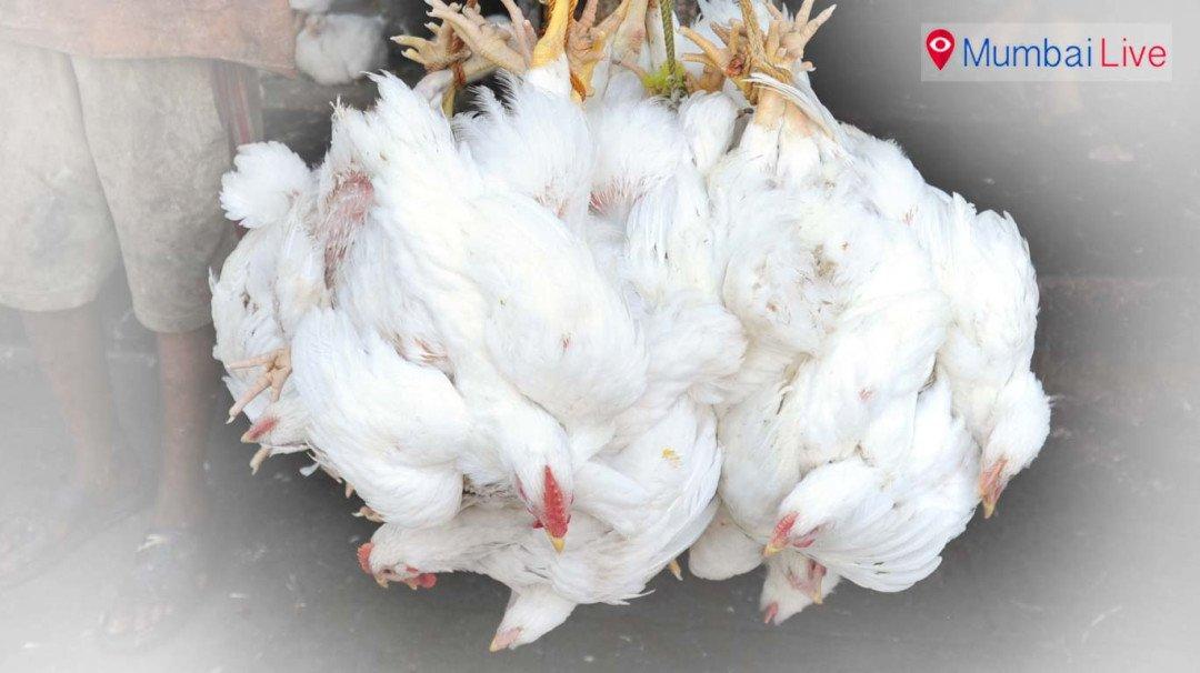 मुंबईत कोंबड्यांचे स्वतंत्र पशुवधगृह