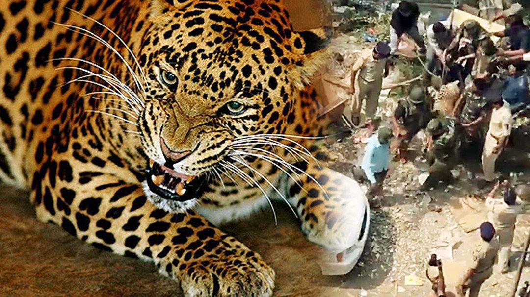 मुलुंड में तेंदुआ का आतंक, 6 को किया घायल ।