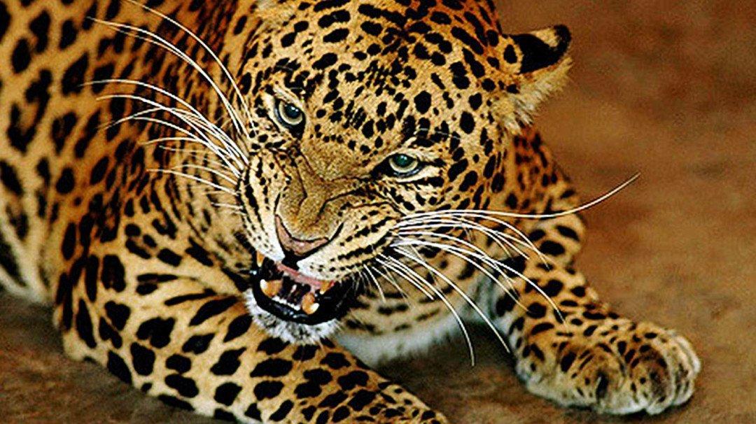 Leopard attacks six people in Mulund