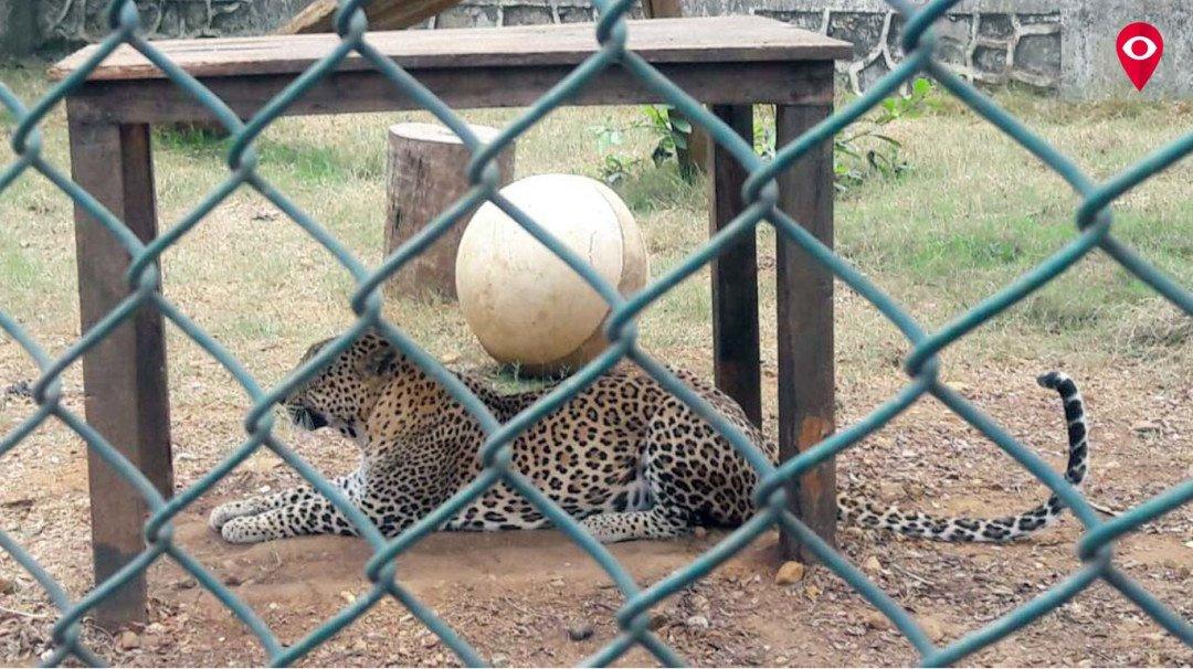 Ramdas Athavale adopts a wild cat