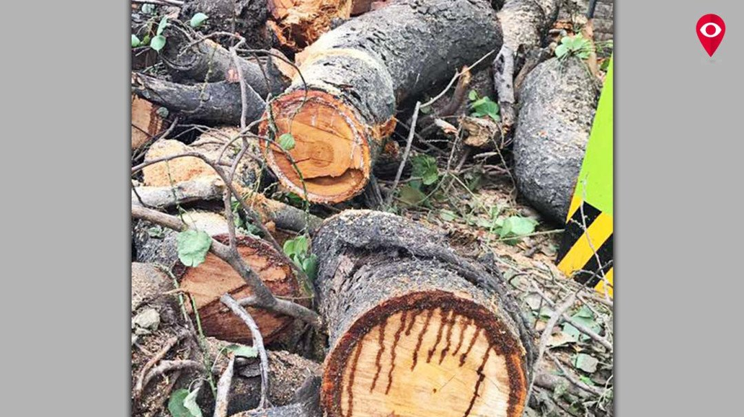 Tree surgeon? What's that, asks MMRC