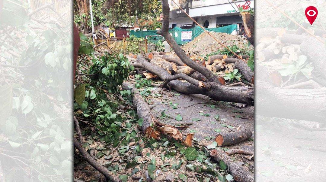 रात में हो रही पेड़ों की कटाई