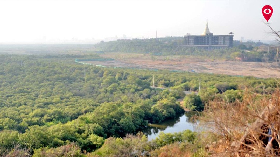 Collector to inspect killing of mangroves in Gorai-Uttan today