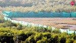 गोराई में 88 एकड़ मैंग्रोज का कत्ल