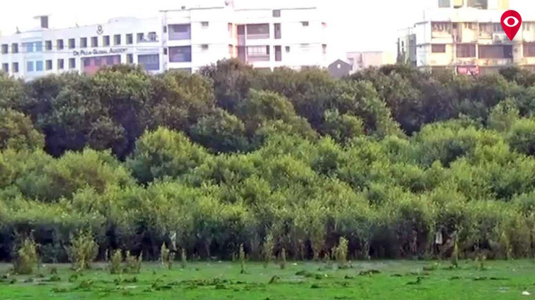Application process to start for construction walls surrounding mangroves