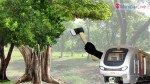 दलदल में पेड़ों का पुनर्रोपन, कैसे रहेंगे जीवित ?