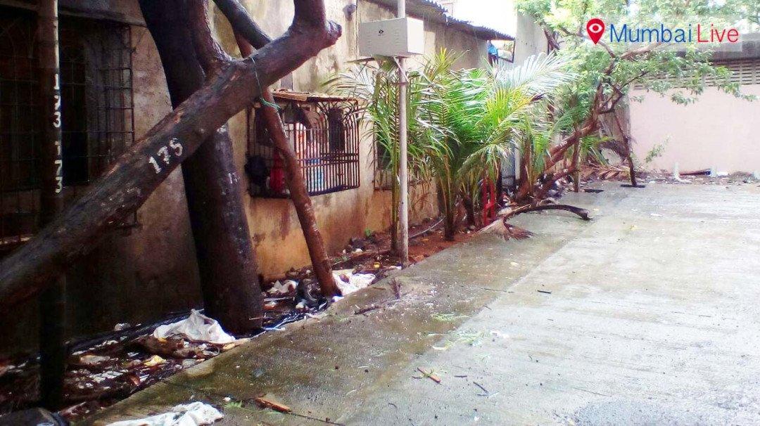 झाडं उठली घरांच्या मुळावर