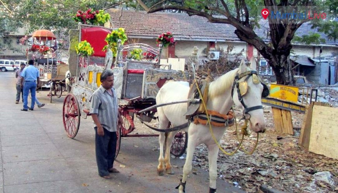 Police seizes horses and carriages