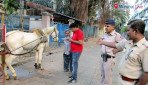 जख्मी घोड़ों को मिली मुक्ति