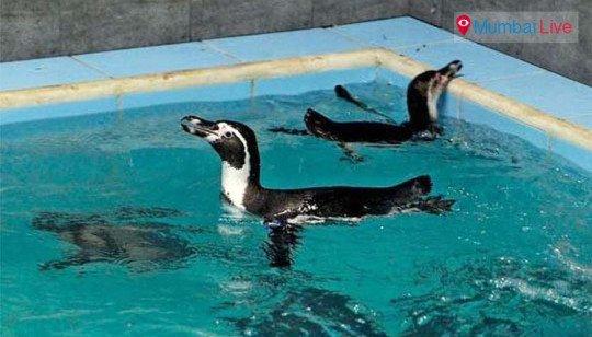 पेंग्विन मृत्यूवरून आदित्य ठाकरेंवर शरसंधान