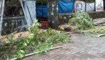 BMC cut trees for Navratri