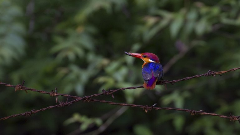 Do not miss the 'Bird Watchers' Conclave' happening this weekend in Thane