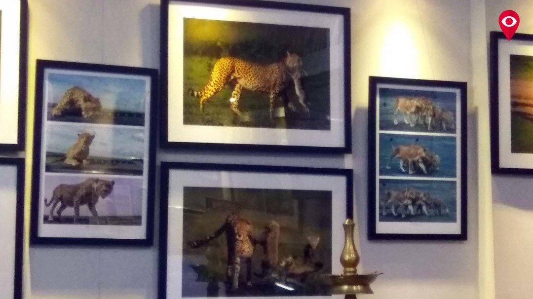 वन्य प्राण्यांच्या जीवनावर आधारित छायाचित्र प्रदर्शन