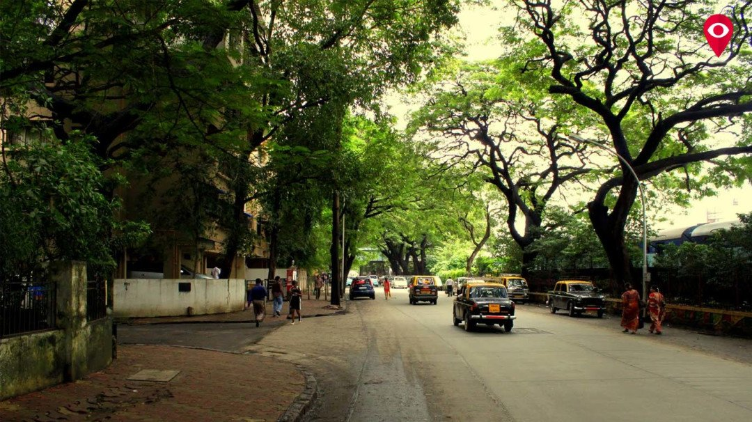 Road widening project could strip Parsi Colony of its green cover