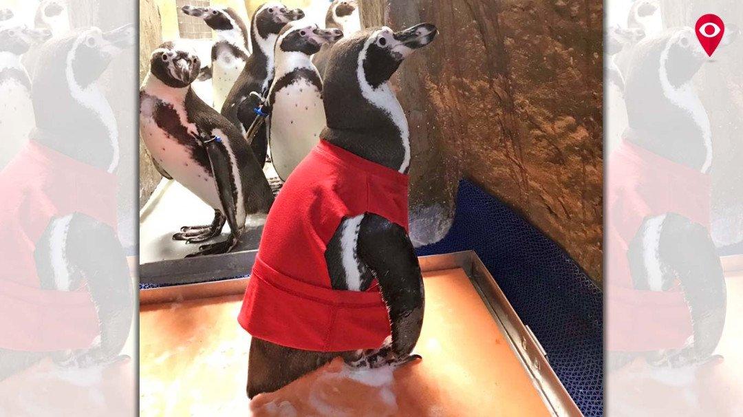 रानीबाग में मोल्ट पेंगुइन का मनाया गया जन्मदिन