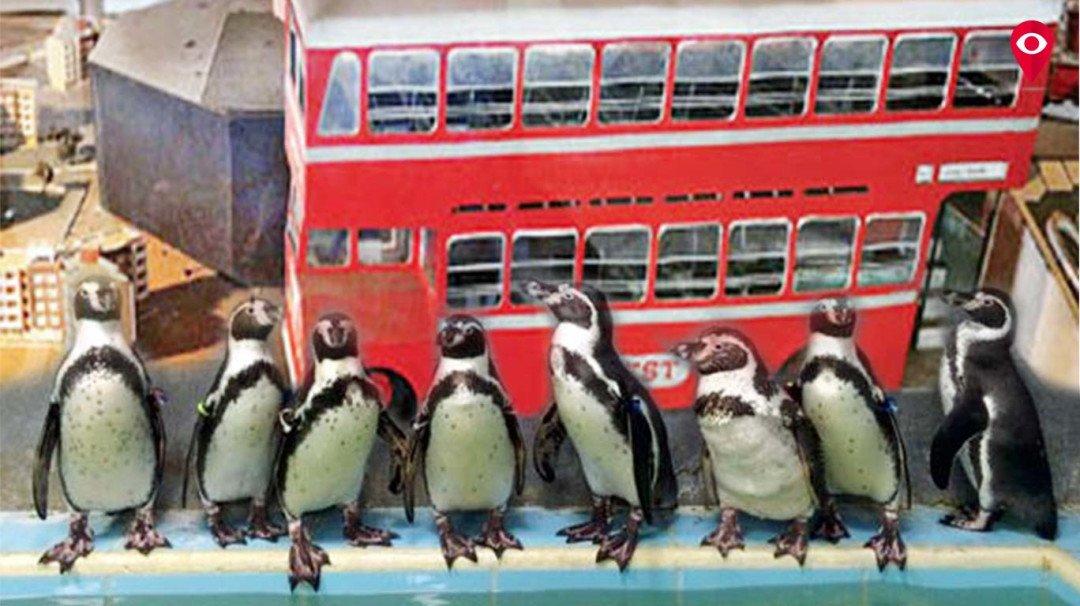 पेंग्विन कक्षाच्या इमारतीत उभारणार बेस्टचे संग्रहालय