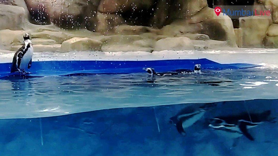 लोकांच्या गर्दीमुळे पेंग्विन तणावात ?
