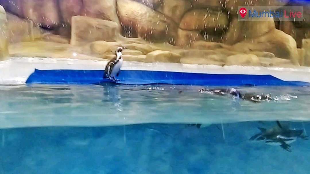Post 1 April, Mumbaikars can see penguins for free